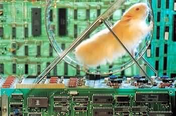 computer_hamster.jpg