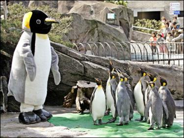 Emperor penguins look up at a giant imposter at Tokyo's Ueno Zoo, Japan. Zoo director Teruyuki Komiya dressed up for a stint in the penguin enclosure for the annual April Fool event to display a human being at the zoo(AFP/Yoshikazu Tsuno)