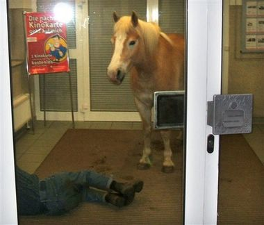 A photo released by police on Tuesday, April 24, 2007 shows a horse standing next to a sleeping man in the foyer of a bank in the east German village of Wiesenburg on Monday, April 23, 2007. The obviously drunken man tried to rest with his horse in the bank's entrance, when passers-by called the police who could convince the man and horse to leave the bank. (AP Photo/Police Handout)