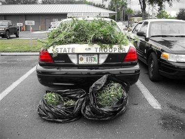 This photo provided by the Florida Highway Patrol shows a State Police cruiser covered with bags of marijuana Tuesday, Nov. 27, 2007. The Florida Highway Patrol says anyone missing two big bags of pot can call their Tampa area office. A crew picking up litter from along Interstate 4 near Tuesday morning made an unusual find: two big plastic garbage bags stuffed with freshly harvested marijuana. (AP Photo/Florida Highway Patrol)
