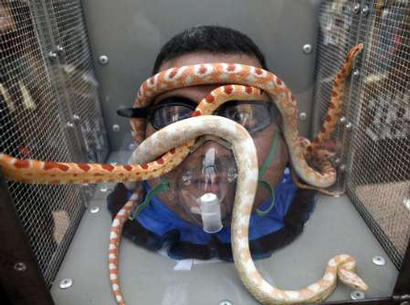 Snakes writhe around the head of visitor Luis Hernandez in a new extreme Halloween attraction at Universal Orlando, October 3, 2003. At the new attraction, snakes, scorpions, rats, worms or cockroaches are dumped into a plexiglass box placed over the theme park guest's head. As Halloween events kick off nationwide this weekend, Universal's Halloween Horrror Nights 13 debuted this 'Fear Factor'-like experience with brave guests lining up to go nose-to-nose with the rodents, insects and reptiles. REUTERS/Universal Orlando/Kevin Kolczynski