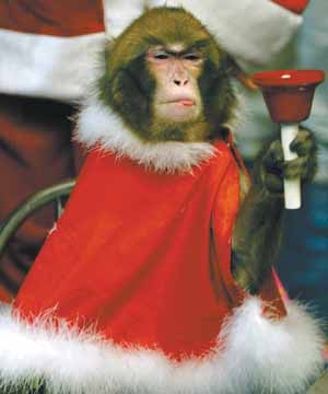 A monkey named Arong wears a Santa Claus outfit while waving a bell in front of a donation box in Seoul December 9, 2003. Arong is one of two monkeys the Salvation Army is using to entice donations during a charity campaign to help orphans and other needy people. REUTERS/Kim Kyung-Hoon