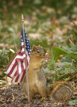 A squirrel pauses at attention as it tries to take some of the material from a U.S. flag Thursday Nov 6, 2008 in Omaha, Neb. (AP Photo/Dave Weaver)