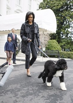 First lady Michelle Obama walks with their 6-month-old Portuguese water dog Bo as President Barack Obama and daughter Sasha follow. (THE ASSOCIATED PRESS/Charles Dharapak)