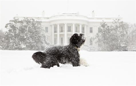 Bo, the Obama's family pet, plays in the snow during a blizzard on the south grounds of the White House, Feb. 10, 2010. (Official White House Photo by Pete Souza)