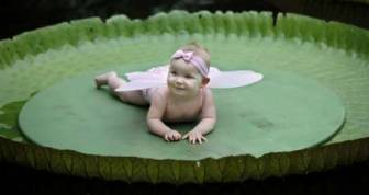 Seven-and-a-half-month old Tanisha Overbeeke smiles while resting on top of a leaf of the Victoria Amazonica at the Rotterdam Blijdorp Zoo September 1, 2010. Children could be photographed on top of the leaf, under the condition that they do not weigh more than 15 kg (33 lbs). The Victoria Amazonica blossoms over two nights producing flowers that are white on the first night, which then turn pinkish-red by the second night. Its leaf could have a diameter of up to two-and-a-half meters. REUTERS/Jerry Lampen