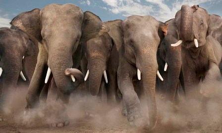 wallpaper-elephant-sm - Copy.jpg