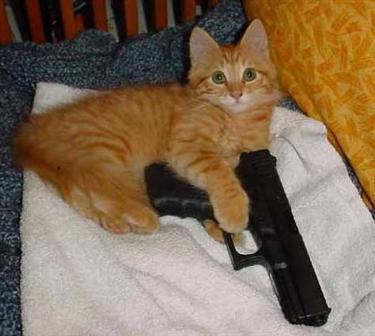cat_holds_gun_375.jpg