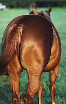 horses_ass.jpg