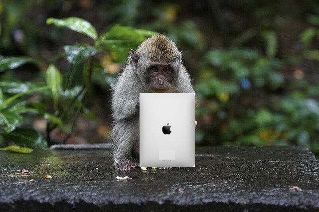 Apps for Apes: Orangutans using iPads to paint and video chat with other apes