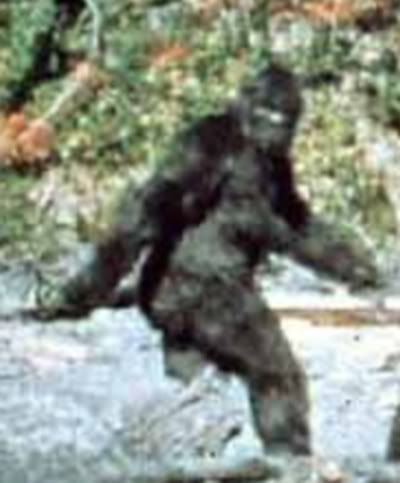 patterson_bigfoot-1