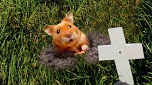 13-1219 - Dead Hamster 500w 281h