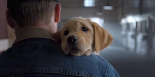 14-0203 Bud Puppy 500x250