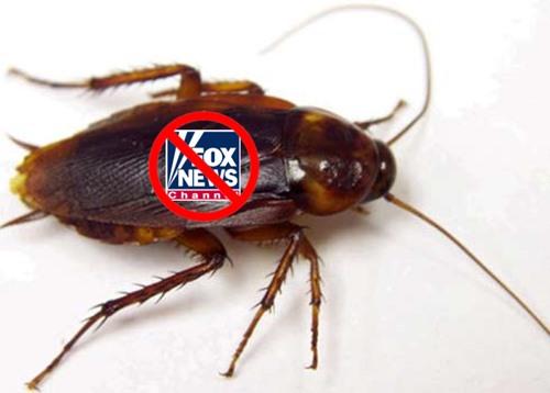 anti-Foxroach