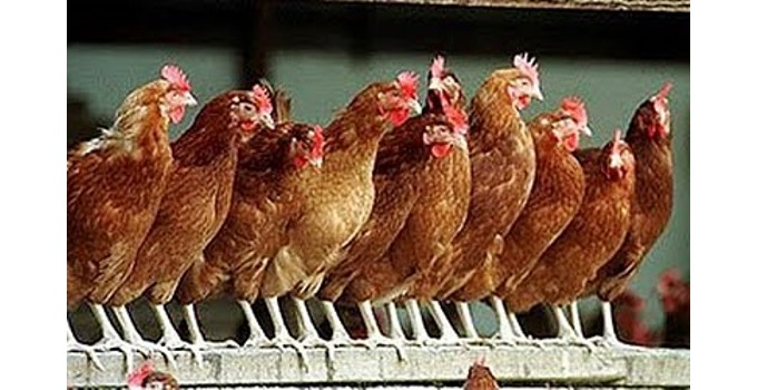 Illinois Political Chickens Coming Home To Roost – Wizbang