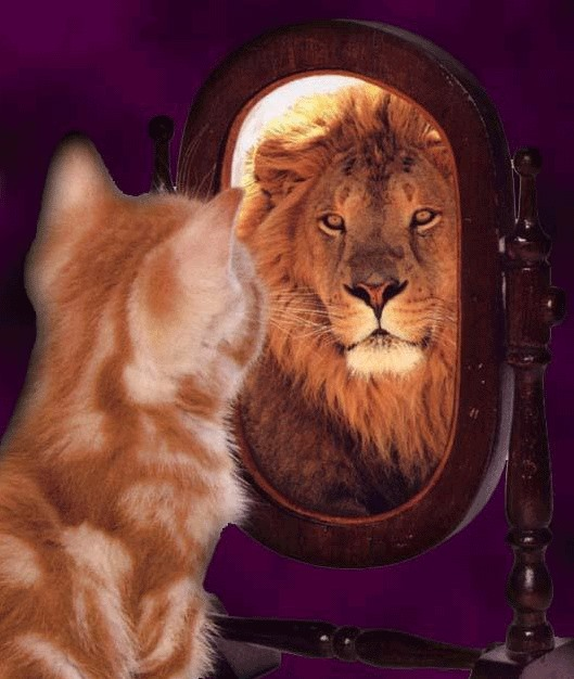 Cat sees lion in mirror
