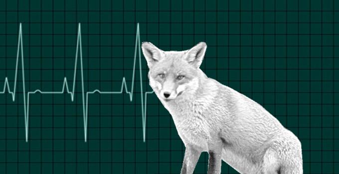 Fox Health